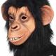 maschera-gorilla-animale---Mazzucchellis